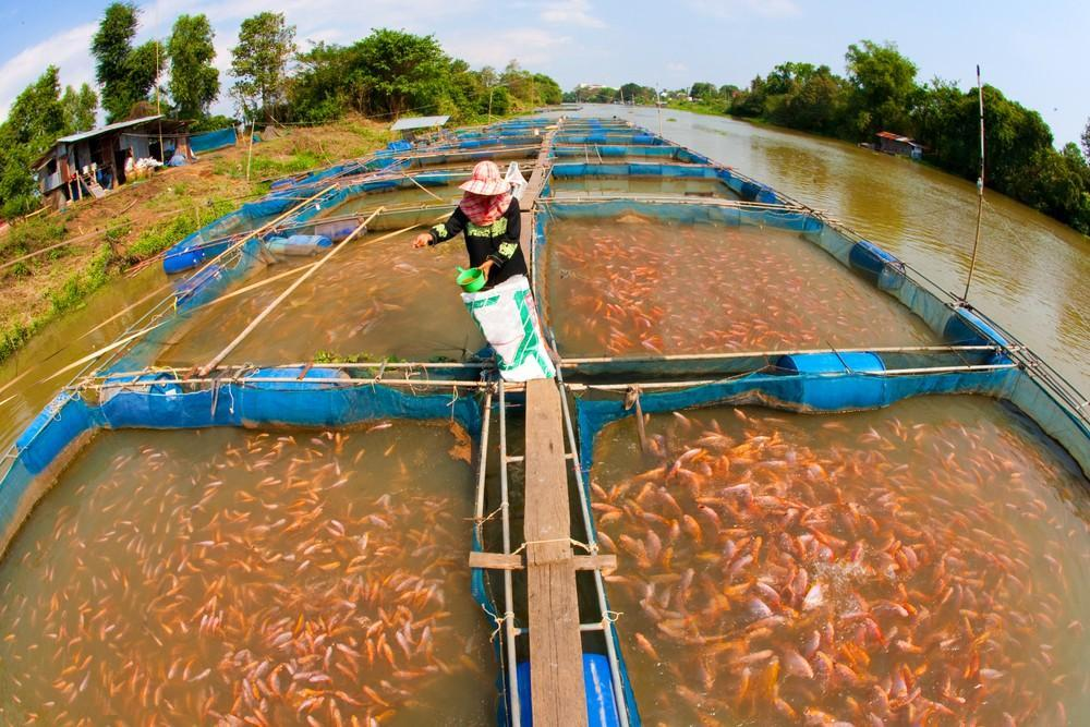 How Does Water Quality Affect Aquaculture Sensorex Blog