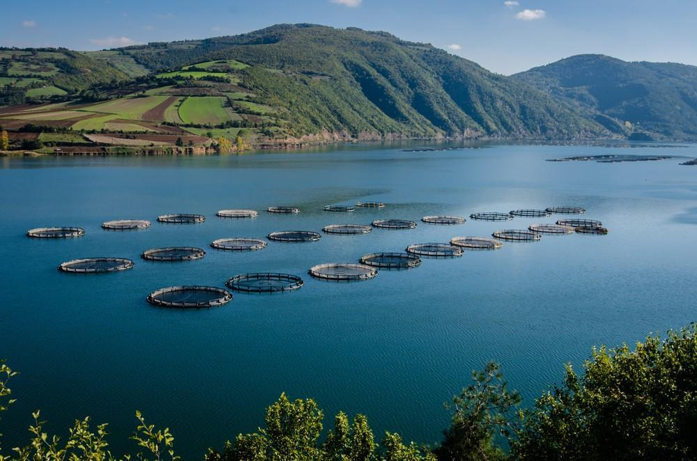 How Does Water Quality Affect Aquaculture Sensorex Blog