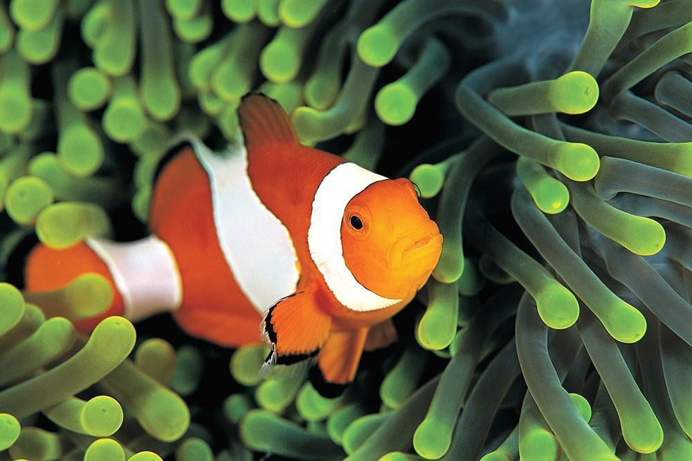 healthy aquarium water pH