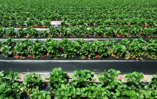 specialty crop systems
