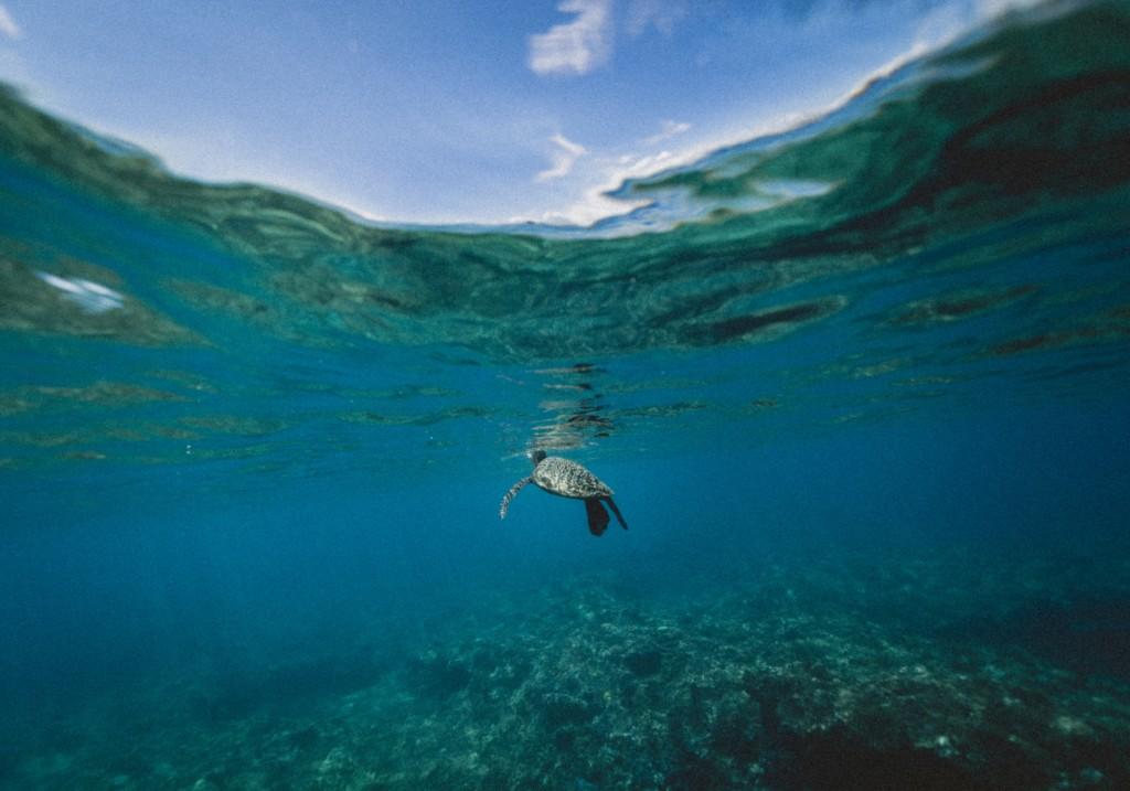 aquaculture turtle underwater