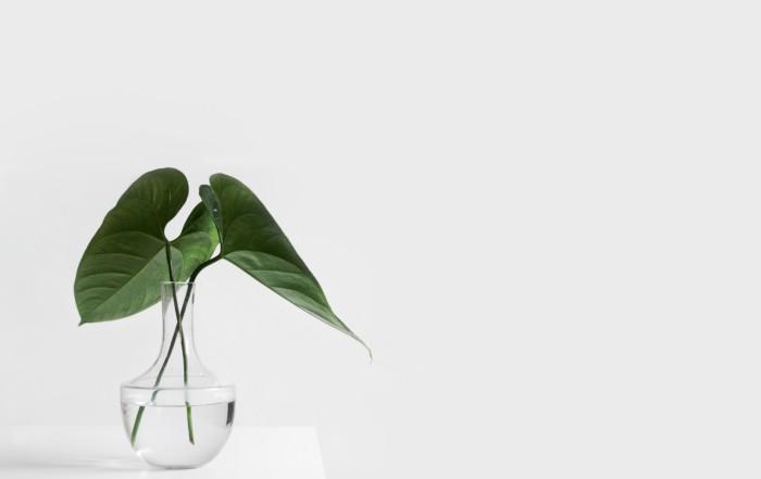 plant in water vase