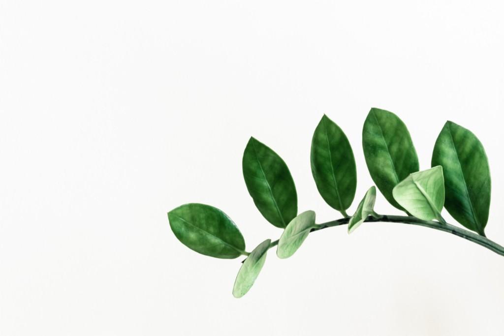 modern plant