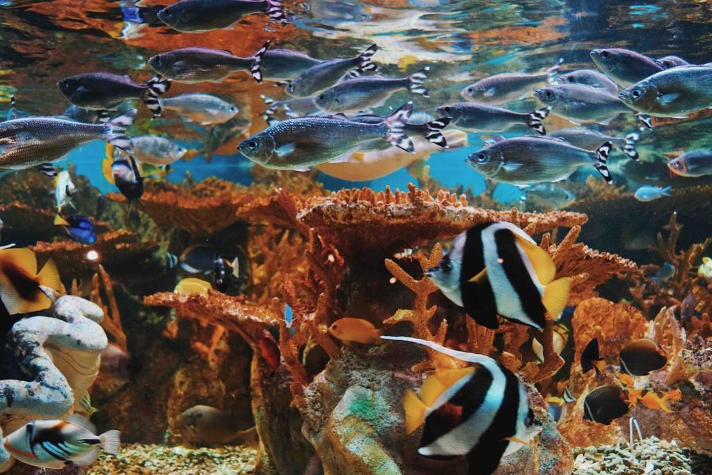 ocean water & fishes undersea