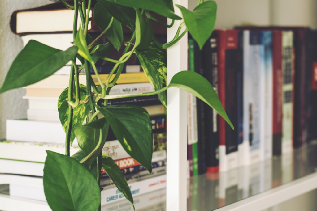 indoor house plants next to bookcase and books