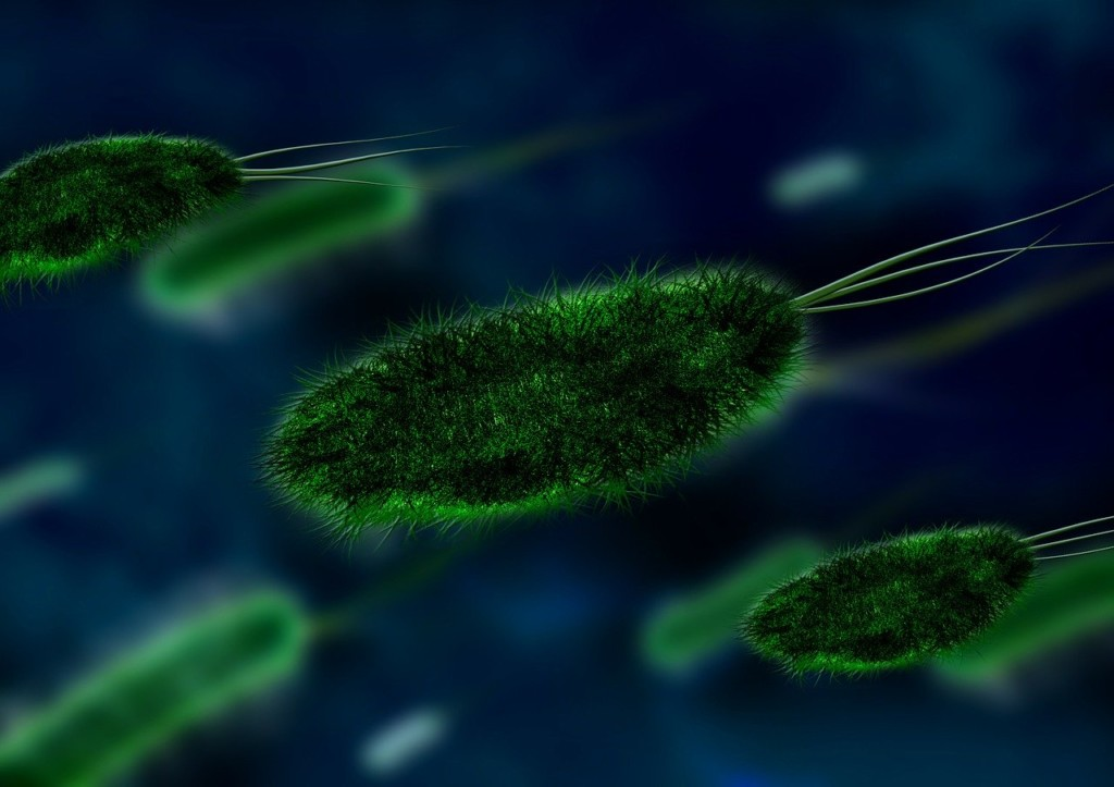 green bacteria moving