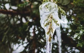 ice melt on treat leaves