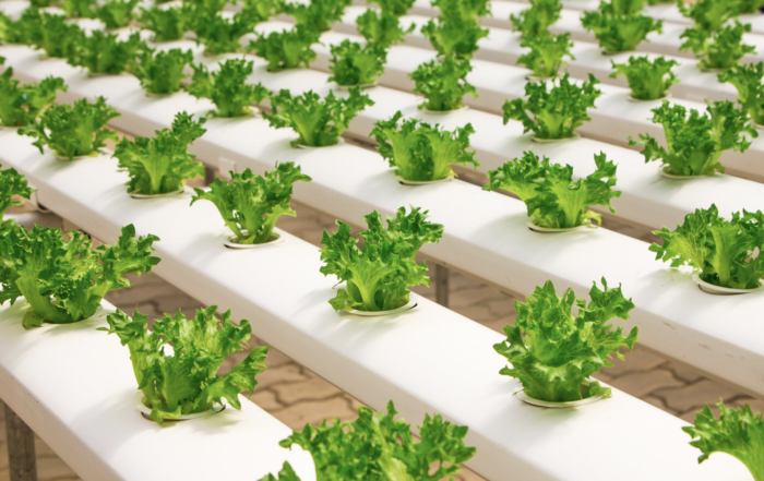 hydroponic plant system greenery