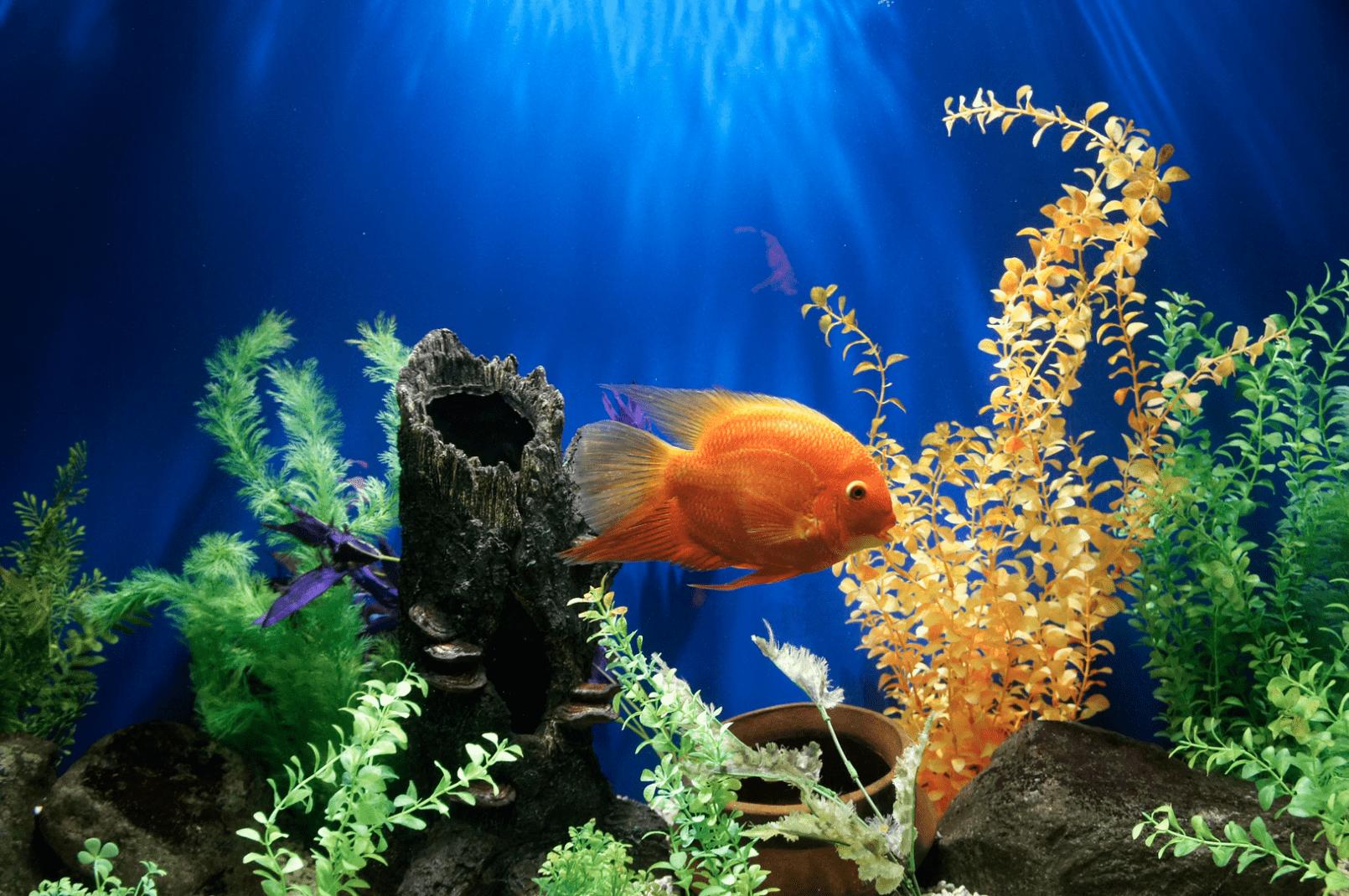 yellow fish swimming underwater with plants