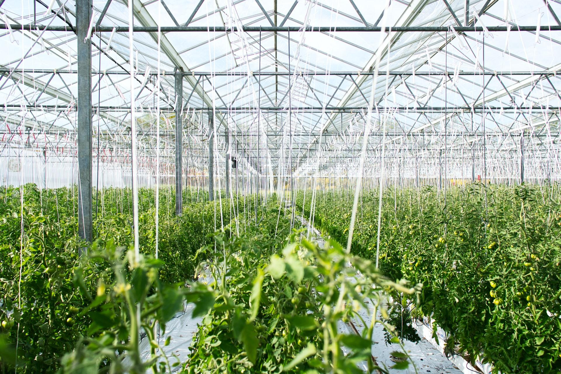 greenhouse plant