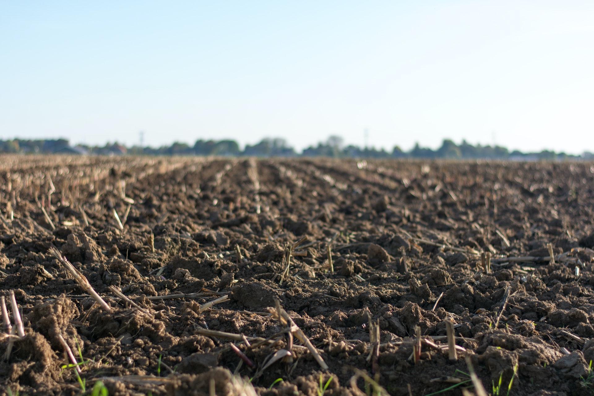 soil on ground eye level