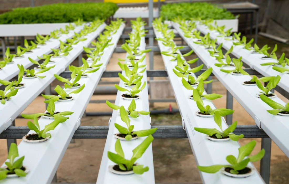 agriculture and aquaponics