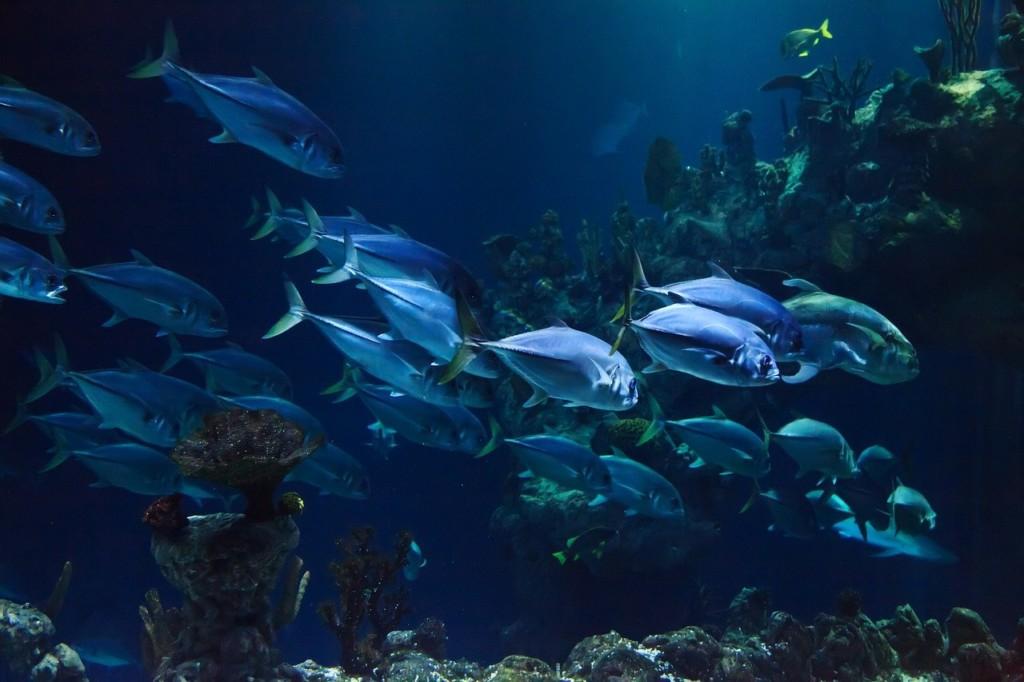 fish aquaculture